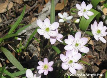 Z Hub Wildflowers Of Sw Michigan