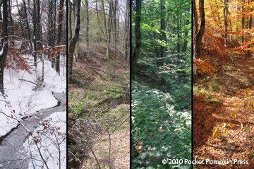http://www.z-hub.org/nature/znature-images/z5938seasons1.jpg